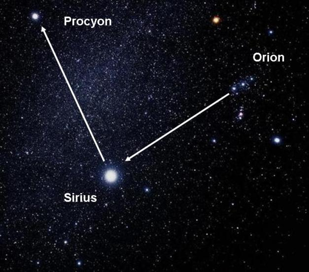 Procyon_Orian